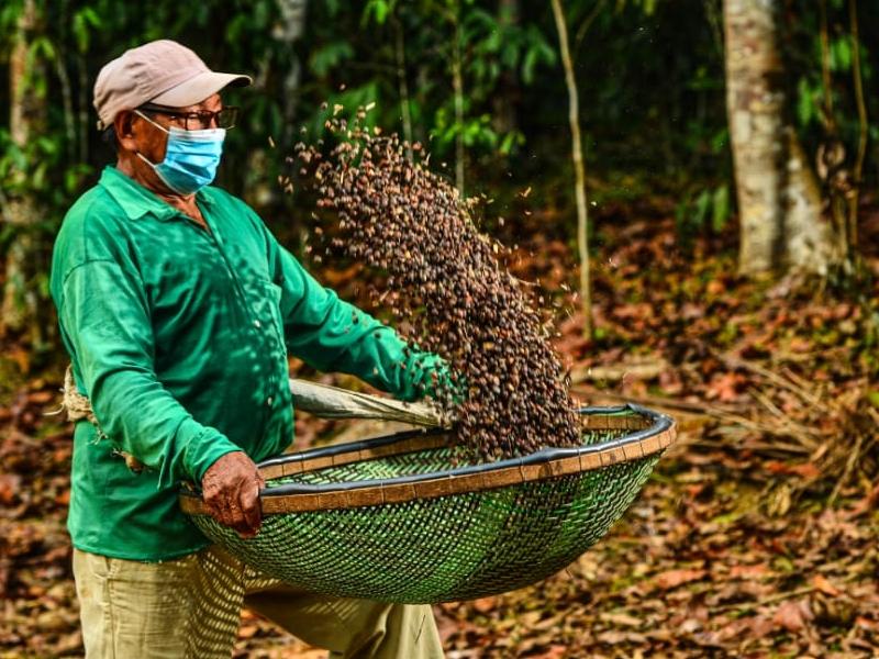 Projeto de café orgânico diversifica renda de produtores e garante conservação ambiental